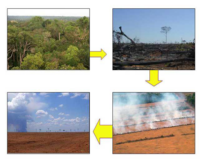 agriculture and current deforestation practices This paper models the adoption of sustainable agricultural practices by households in ouro preto do oeste, rondônia, brazil using panel data collected in 1996 and 2000, and tests the relation between the use of sustainable methods of agriculture and deforestation.