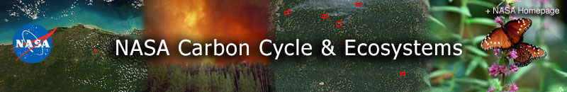 Carbon Cycle & Ecosystems